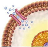 cell membrane preparations